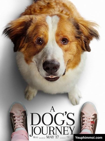 Cuộc Phiêu Lưu Của Chú Chó Bailey